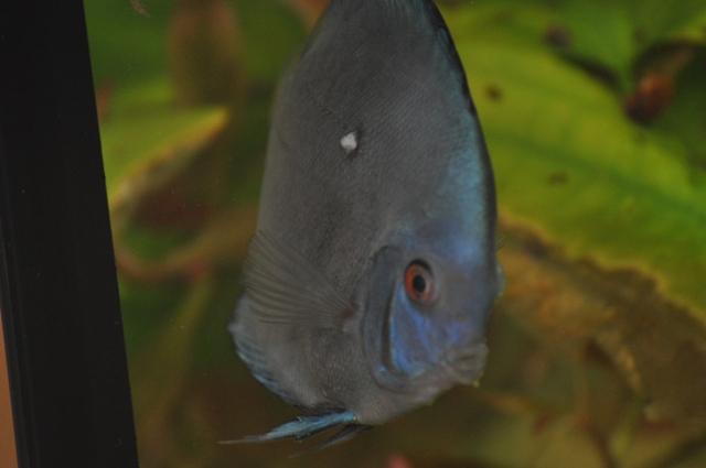 Leishmanien zerkarien und co diese parasiten befallen for Teichfische arten bilder